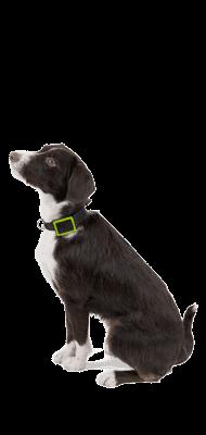 Téléphone WEENECT Balise GPS pour animaux